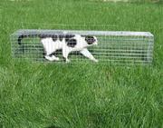 Жіволовка,  клітка,  капкан,  щуроловка,  пастка для кота. Крысоловка