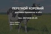 Перегной коровий 3300 грн/Зил с доставкой Кременчуг и обл.