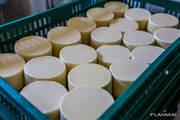 Продам действующий бизнес по производству сыра,  молочной продукции