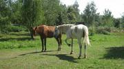 Конные прогулки верхом